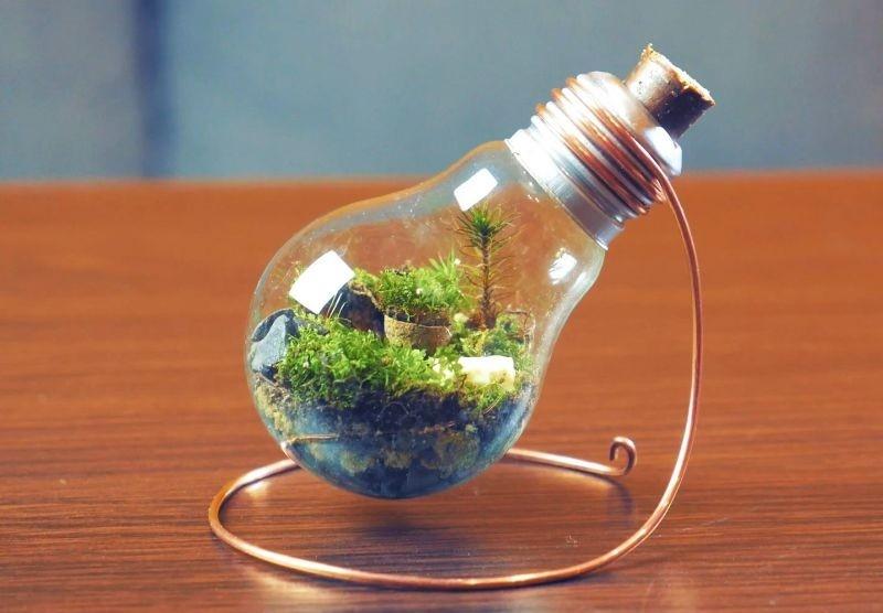 Флорариум в лампочке мастер-класс