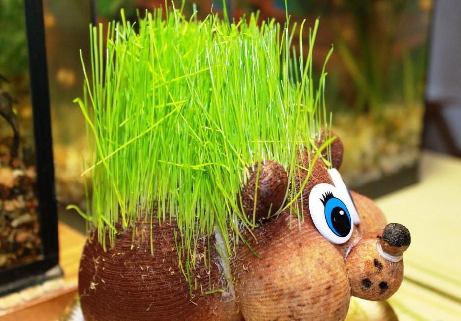 Мастер-класс по созданию травянчиков